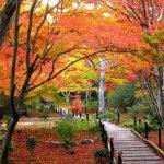 京都の見頃紅葉情報を紹介。名所から穴場まで、情報を見逃せない!