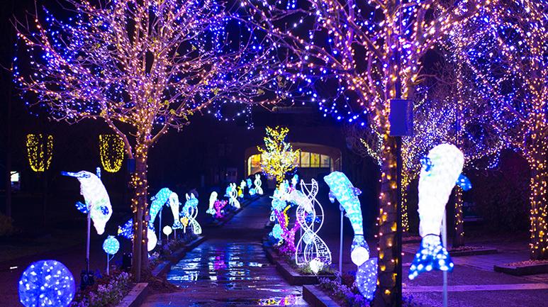 2018年クリスマス情報【京都】